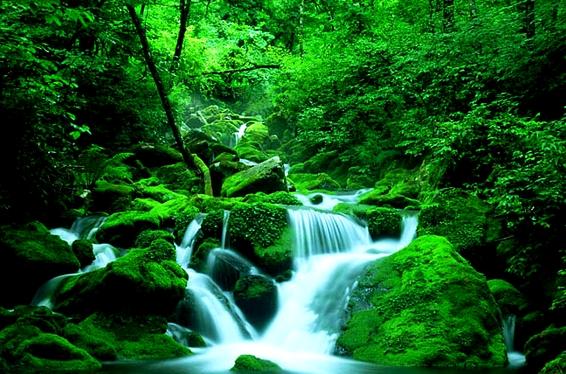 Forest Hymn/Bill Douglas