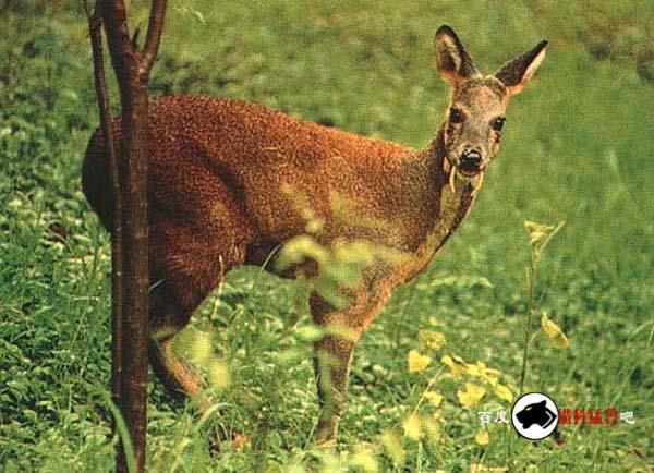 食物链的常见食草动物